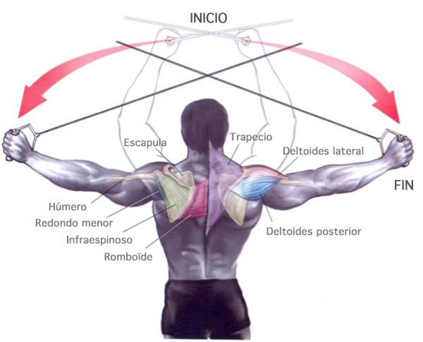 Ejercicios de hombros: con polea alta - Prozis