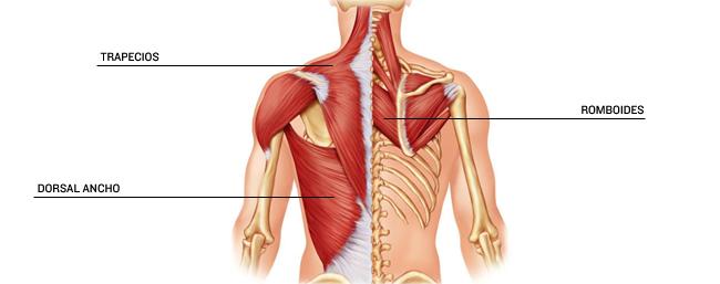 Los mejores ejercicios para ganar músculos en la espalda | Mi Lado ...
