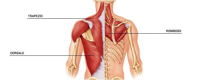 Il mal di schiena è vite più alte e la temperatura 37