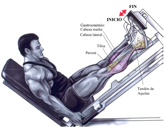 Ejercicios para las piernas – Pantorrilla en máquina | Prozis