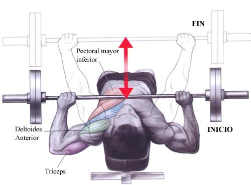 Pecho del pecho de polla muscular