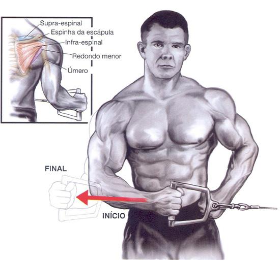 Populares Exercícios ombros – Rotação externa   Prozis QW13