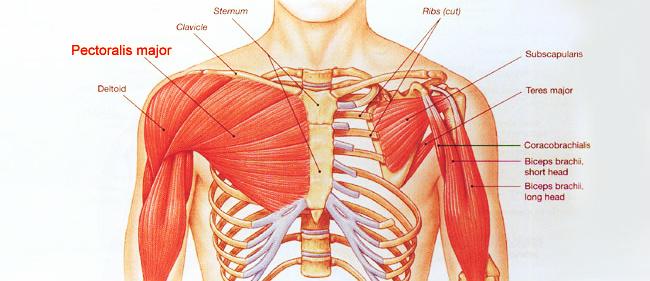 Der Moden auf die Erhöhung der Brust in sims 4