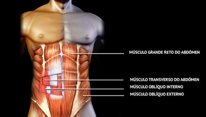 Abdominales: la anatomía y los entrenamientos que te dejarán KO