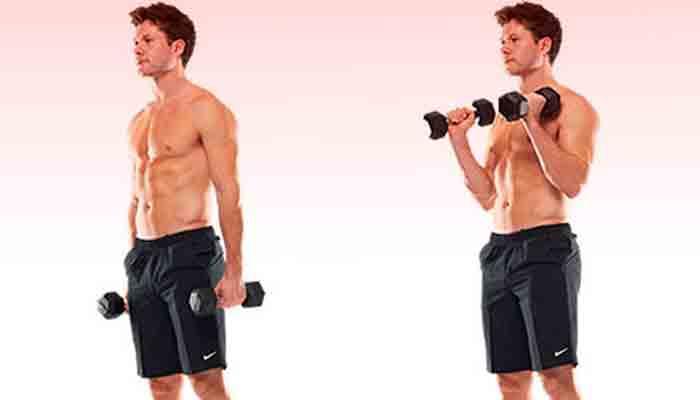 Bodybuilding Biceps Workout Plan Intermediate